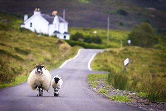 Viajes Escocia 2018. Viaje Escocia Highlands cultural 7 días