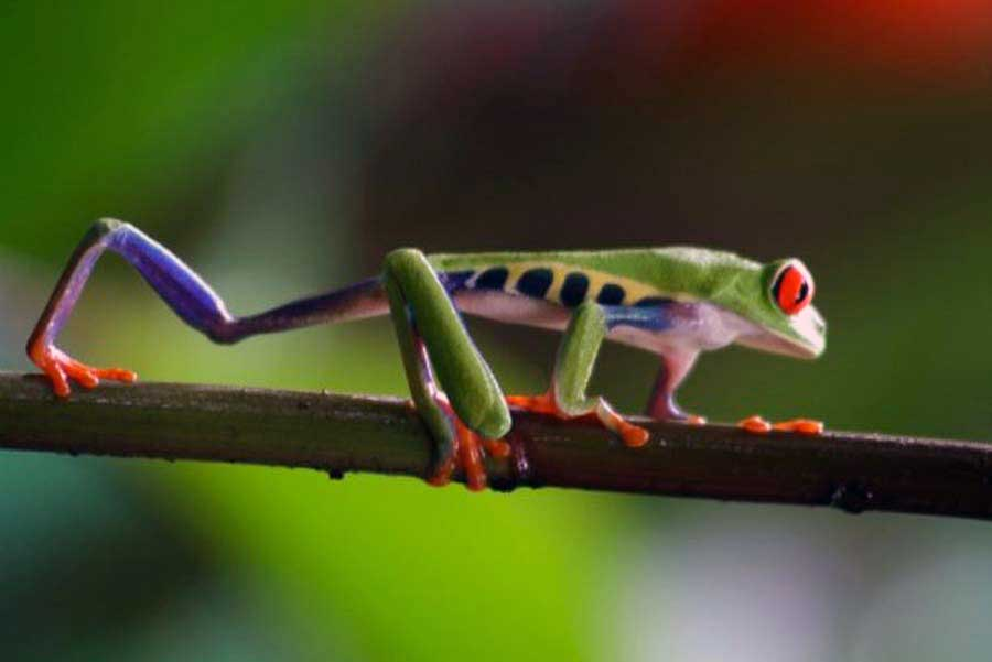 Viajes Costa Rica y Panamá 2018: Viaje a Costa Rica y Bocas del Toro 16 días