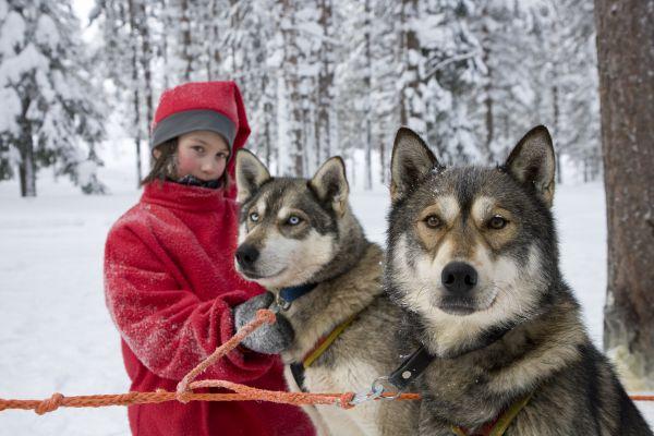 Viajes a Laponia Fin de Año 2017: Viaje Año Nuevo Navidad en Kemi Laponia