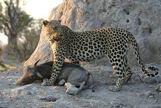 Viajes a medida Botswana: Safaris Privados en Botswana