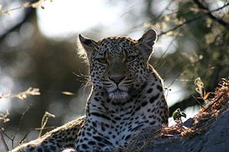 Viajes a Botswana y Cataratas Victoria 2018: Viaje Safari Botswana y Zimbabue 17 días