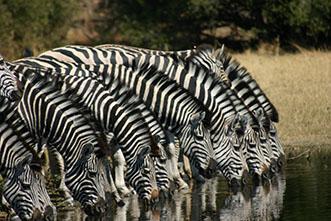 Viajes Namibia, Botswana y Cataratas Victoria: Safari Ruta Okavango 21 días