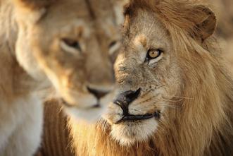 Viajes Kenia y Tanzania 2020: Viaje Safari Clásico en 4x4 9 ó 10 días