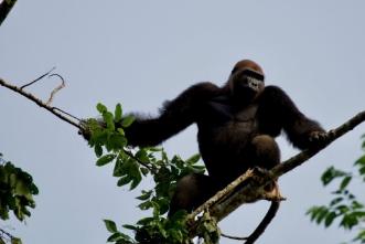 Viajes Gabon 2019: Viaje a Gabon en grupo
