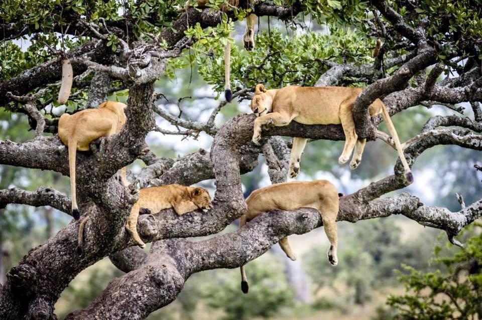 Viajes Kenia Tanzania Zanzibar Navidad 2019: Viaje safari Kenia, Tanzania y Zanzíbar Experiencias Fin de Año 16 días