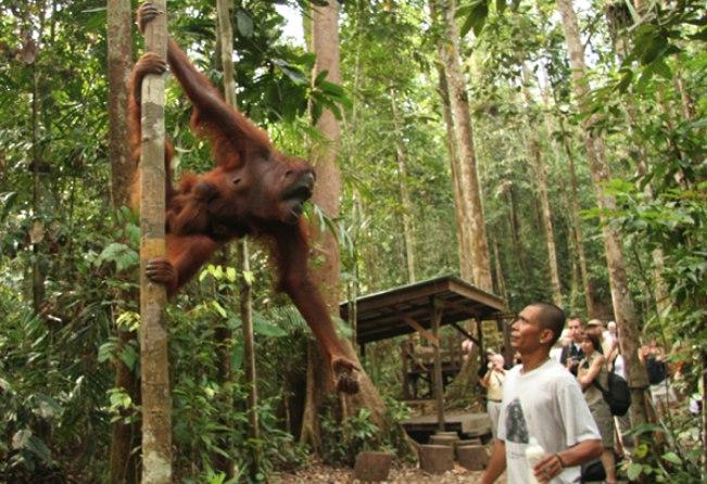 Viajes Malasia 2020: Viaje Selvas de Borneo y Malasia en grupo 16 días