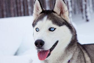 Viajes Laponia 2021: Viaje a Laponia Aventura de Invierno en Rovaniemi 8 días
