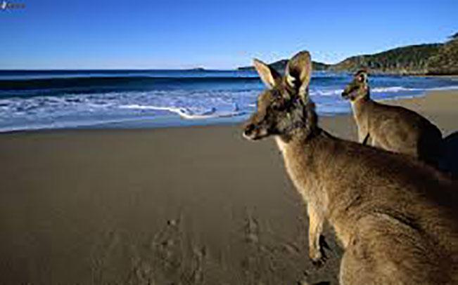 Viajes Australia Octubre 2019: Viaje a Australia Octubre con guía