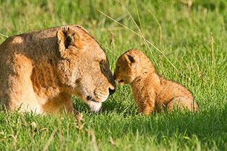 Viajes Safaris Botswana y Zimbabwe 2020: Viaje Aventura Botswana y Cataratas Victoria16 días