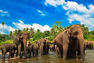 Viajes a Sri Lanka 2019: Viaje a Sri Lanka y Maldivas