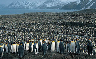 Viajes a la Antártida 2016 y 2017: Viaje Antártida Clásica Georgias del Sur