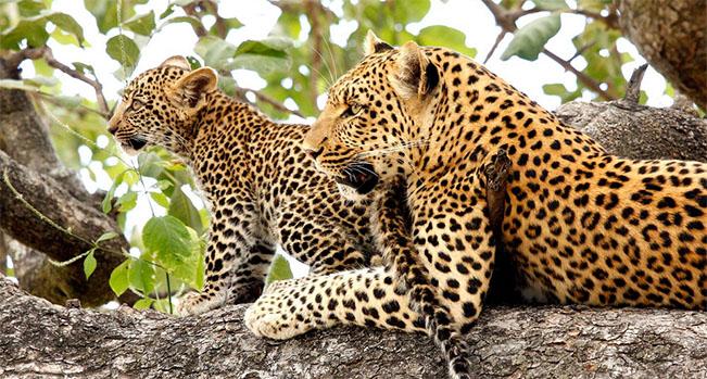 Viajes Safaris Botswana 2018: Viaje Botswana y Cataratas Victoria 16 días