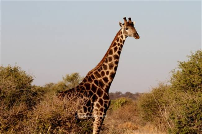 Viajes Botswana 2017: Viaje Botswana al completo, de 10 hasta 16 días