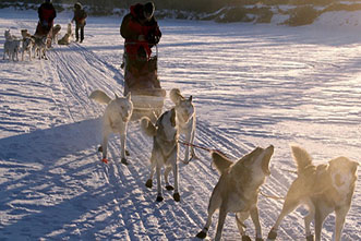 Viajes Canadá Navidad 2018: Viaje Fin de Año en Yukon Aventura de Invierno 6 días