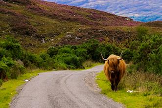 Viajes Escocia 2020: Viaje a Escocia al completo 8 días