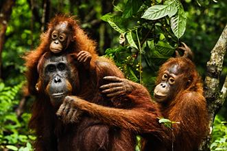 Viajes a Indonesia 2018: Viaje Orangutan Trek en 26 días