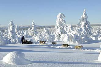 Viajes Finlandia: Viaje a Finlandia - Trineos de perros y raquetas