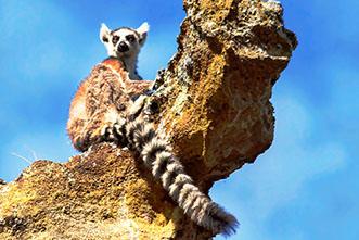 Viajes Madagascar 2017. Viaje a Madagascar 30 Julio Lemures