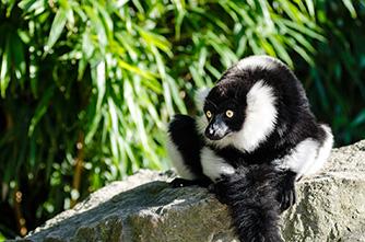 Viajes Madagascar 2018: Viaje Madagascar Salvaje 8 días