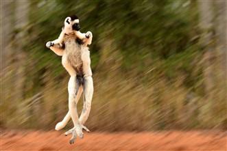 Viajes Madagascar 2019: Viaje a Madagascar Lemures Privado 15 días
