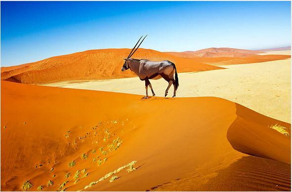 Viajes Namibia 2020: Viaje privado a Namibia 2020 con guía-conductor 10 días
