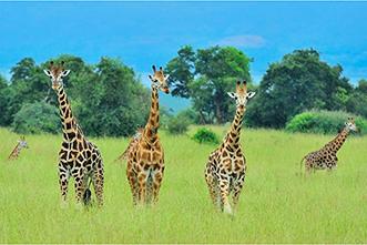 Viajes Uganda 2018: Viaje Safari en Uganda 8 días