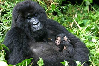 Viajes Uganda 2017: Viajes a Uganda Gorilas + opcional Zanzíbar