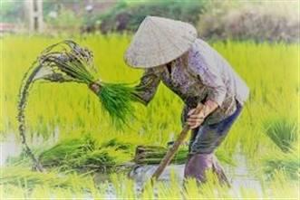 Viajes Vietnam 2018: Viaje Vietnam 10 días