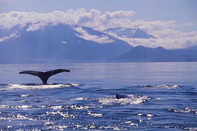 Viajes Alaska 2019: Viaje Alaska panorámico a tu aire 16 días