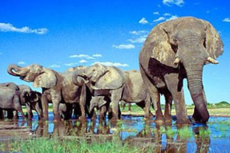 Viajes Safaris Botswana 2018: Viaje Botswana y Cataratas Victoria Aventura 17 días