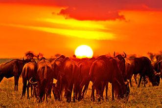 Viajes Uganda, Kenia 2018: Safari Uganda Kenia 12 días