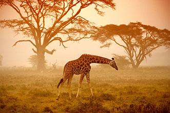 Viajes Kenia y Tanzania Navidad 2020: Viaje Fin de Año en Serengeti Safari Exclusivo 11 días