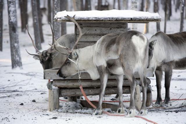 Viajes Laponia Fin de Año 2018: Viaje a Laponia 2018 Fin de Año en Salla 6 días