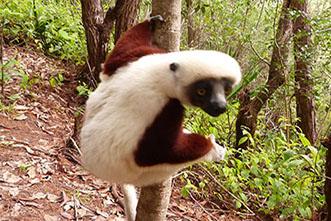 Viajes Madagascar: Viajes en Madagascar a medida