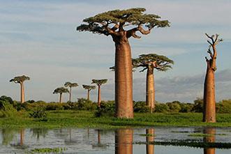 Viajes Madagascar 2018: Viaje Madagascar La isla continente 19 días