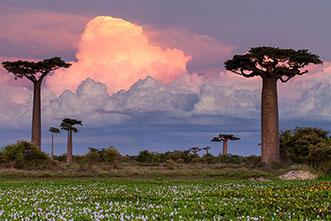 Viajes Madagascar 2017. Viaje a Madagascar Septiembre Baobabs