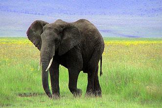 Viajes Kenia 2020: Viaje a Kenia Safari de Aventura 10 días ó con playa 13 días