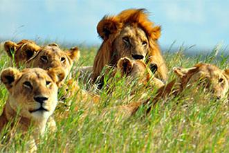 Viajes Safaris 2018: Viaje Kenia Tanzania Zanzíbar Lujo 15 días