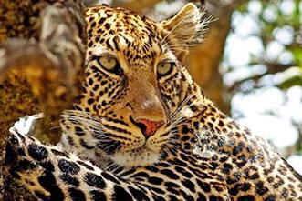 Viajes Kenia 2018: Viaje a Kenia Safari de Aventura 10 días