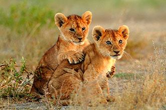 Viajes Kenia Tanzania 2020: Safari Kenia Tanzania Zanzibar Experiencias 15 días