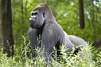 Viajes Uganda y Ruanda 2018: Viaje Safari Gorilas Clásico 18 días