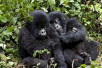 Viajes Uganda 2018: Viaje Safari Trekking Gorilas Aventura 15 días
