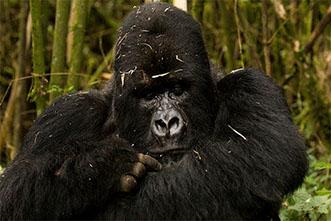 Viajes Uganda y Ruanda 2018: Viaje Safari Trekking Gorilas 18 días