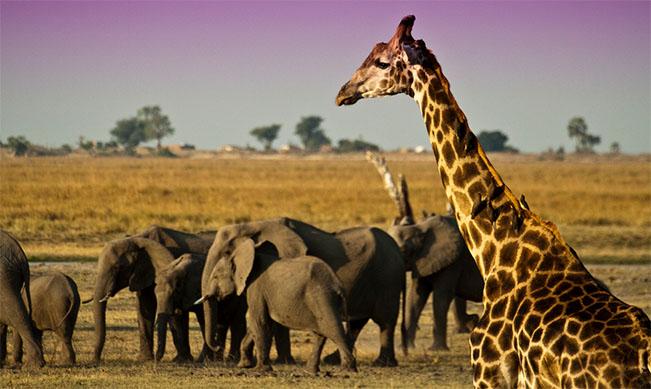 viaje botswana chobe 5